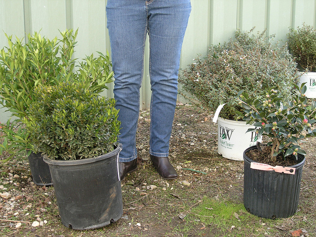 One Reason For Using 3 Gallon Plants Is Availability You Can Find A Much Wider Selection Of Species In Size Than 5